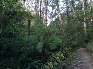 Forrest Trails